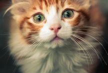 Kittens ♡♡♡