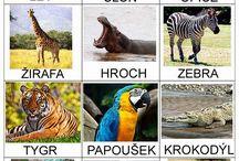 cizokrajná zvířata - ZOO