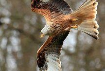 Anatomy of a Falcon