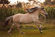 horses + freedom + power
