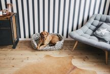 Interior Design and Dogs