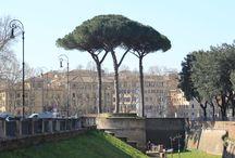 Rome / Een prachtige mooie stad, waar je meerdere keren geweest moet zijn