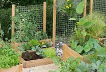 petits  potagers