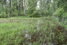 2011 Mission Creek Flooding