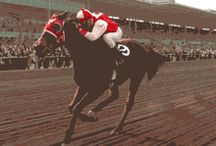 Seabiscuit gif