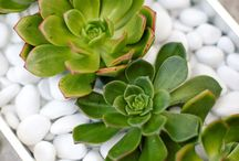 successful succulents