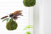 Greenery decor