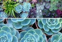 Gardening / by Rachel Soika