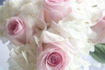 flores / by victoria borbon