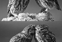 Animals / by MyRanda Wright