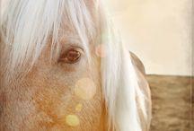 Droom paardjes