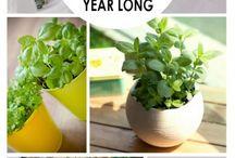 Indoor Herbs garden