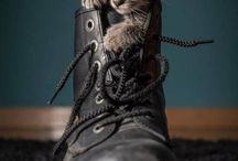 animal photography inspiration