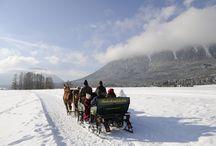 Sonnenplateau Miemingen & Tirol Mitte / Op een half uurtje afstand van Innsbruck ligt Sonnenplateau Miemingen. Een plek waar de hele familie in de zomer gaat wandelen en waar in de winter volop wordt gelanglaufd. Waar de zon bijna altijd schijnt en waar je volop geniet van het prachtige berglandschap! Laat je inspireren en kom in vakantiestemming met dit vrolijke Pinterest bord.