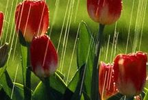Spring! / by Wendy Plake