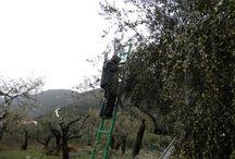 View to Ithaca - Με θέα την Ιθάκη / Pictures from the legendery ilsand of Odysseus, Ithaca, as seen by the locals. Εικόνες από το θρυλικό νησί του Οδυσσέα, Ιθάκη, μέσα από τα μάτια των κατοίκων.