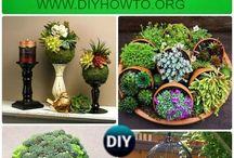 Succulents (outdoor and indoor)