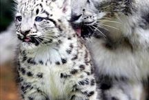 Animals that I love / animals / by Elsa Villa