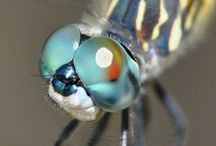 Cool bugs and #insects / insects, bugs and cool creepy crawlies