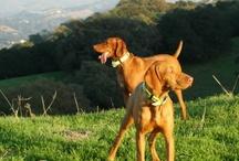 Dogs / by Debra Beck, EdD