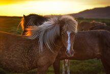 Horse adict !!!
