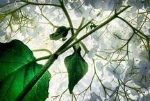 International Garden Photographer of the Year 2014