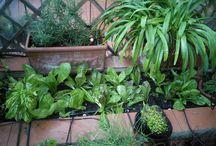 My kitchen garden / My source of health