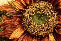Autumn Glory / by Dana Seagle