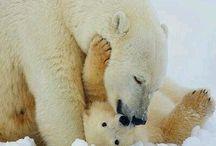 Mamá osa polar y su bebe