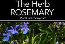 Fűszernövények, gyógynövények