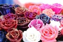 wax roses