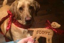 Greyhound Treats & Food