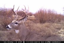 The Remarkable Whitetail Deer / This is a collection of amazing whitetail deer pics captured by our Browning Trail Cameras!