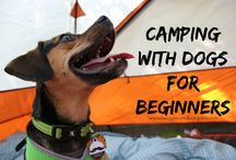 Pet-friendly travel / Pet-friendly travel vacations road trips