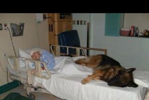 Pet Therapy  / Animal Assisted Therapy #ChildLife #Hospitals