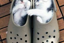 cutie kitty in a shoe