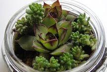 Plant life / by Jackie Richmond