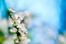 Spring smells like.. / :)