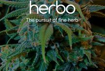 Herbo / Herbo updates and goodies.