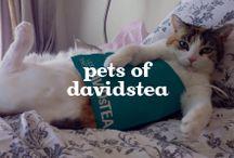 Pets of DAVIDsTEA / by DAVIDsTEA