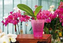 Pokojovky - rostlinky
