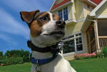 The outdoor dog / Dog Training, gear for the the outdoor and working dog.