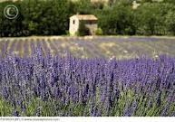 Provence & France