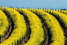 Beautiful Vineyards / Discover inspiring photos of vineyards.