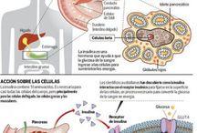 Bio-medice