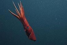 Fauna Marina / El #océano es infinito, ¡al igual que las #especies que lo habitan!  #Animales #Naturaleza