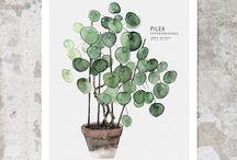obrazy rastlín