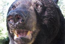 Sunny Martin - Bears / Need I say anything about how Sunny feels toward bears?