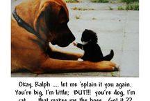 Funny stuff! / by Kelli Filson