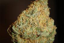 Medicinal Marijuana / by POZ Magazine